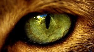 eagle eye3