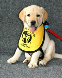 Alan Rosenberg guide dog of amer