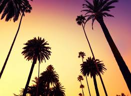 calif palms daybreak