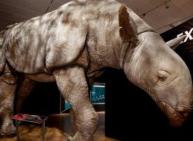 EXHIBIT: EXTREME MAMMALS AT NHM
