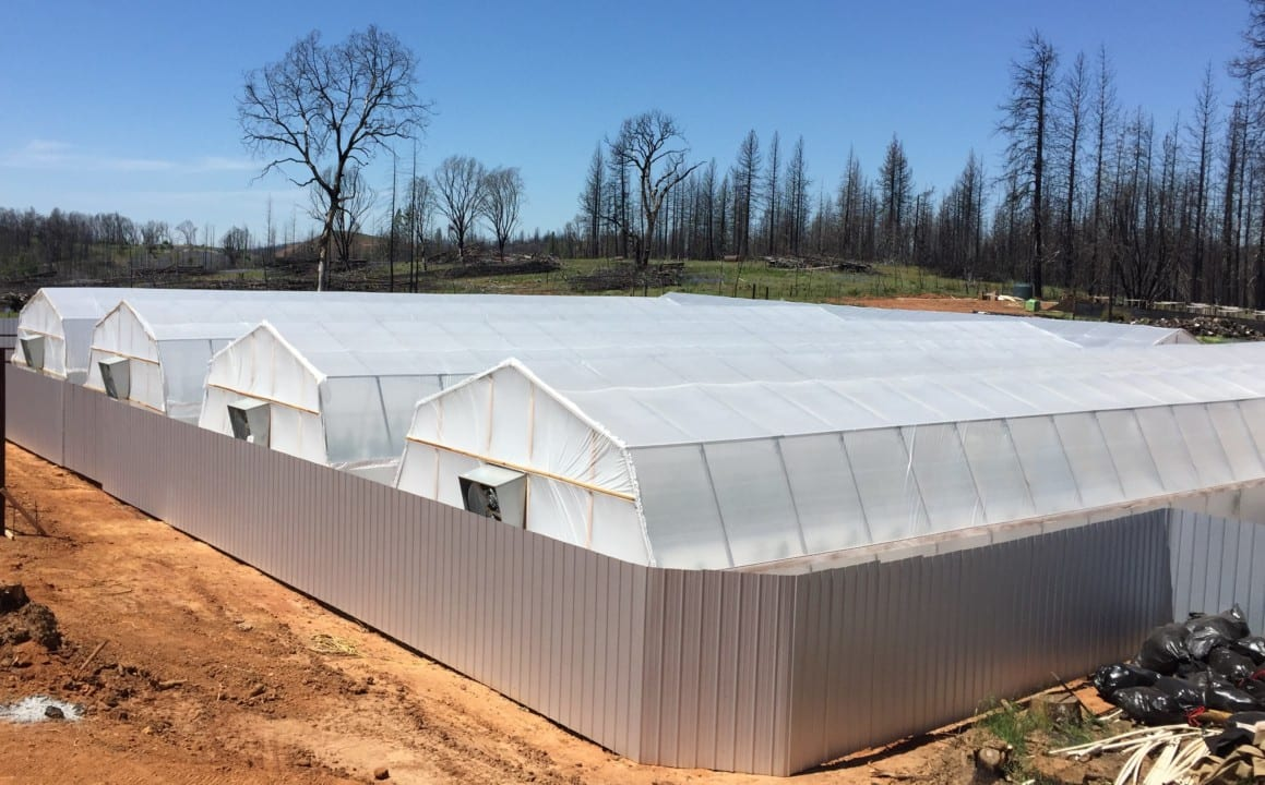 SCNA greenhouses2 - WEALTH IN WEED