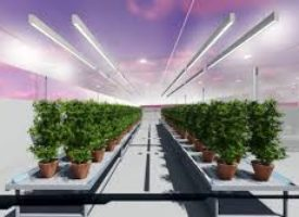 "NEW AGT GREENHOUSE TECHNOLOGY IS ""THE FUTURE OF AGRICULTURE"""