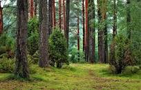 1 - Forest Bathing for Mental Health