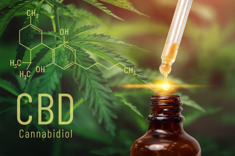 Cannabis CBD oil extracts in jars herb and leaves. Concept medical marijuana.
