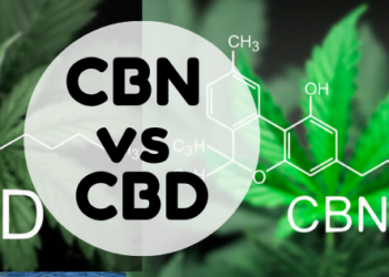 cbn-vs-cbd