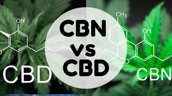 cbn-vs-cbd
