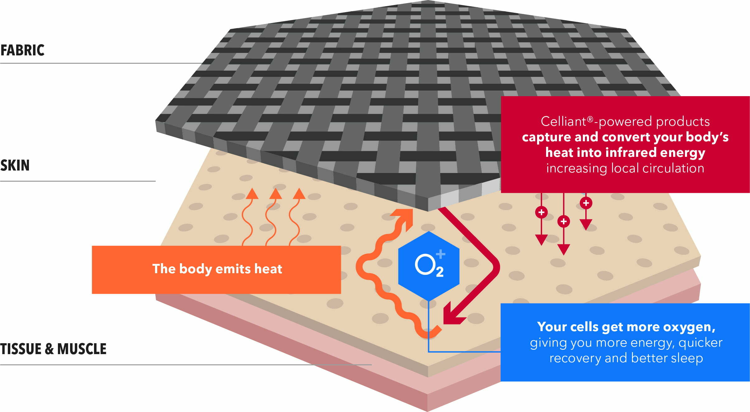 how it works diagram - Amplifying Human Potential: Celliant transforms body heat into infrared energy, resulting in a range of benefits such as increased performance and faster recovery.
