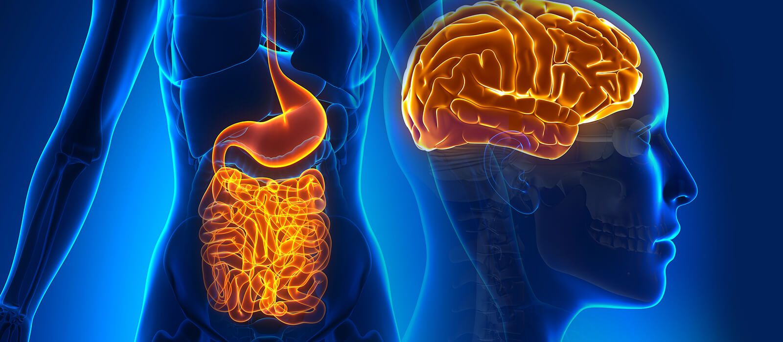 gut brain health and metnal wellness - The Surprising Link between Gut Health and Mental Health