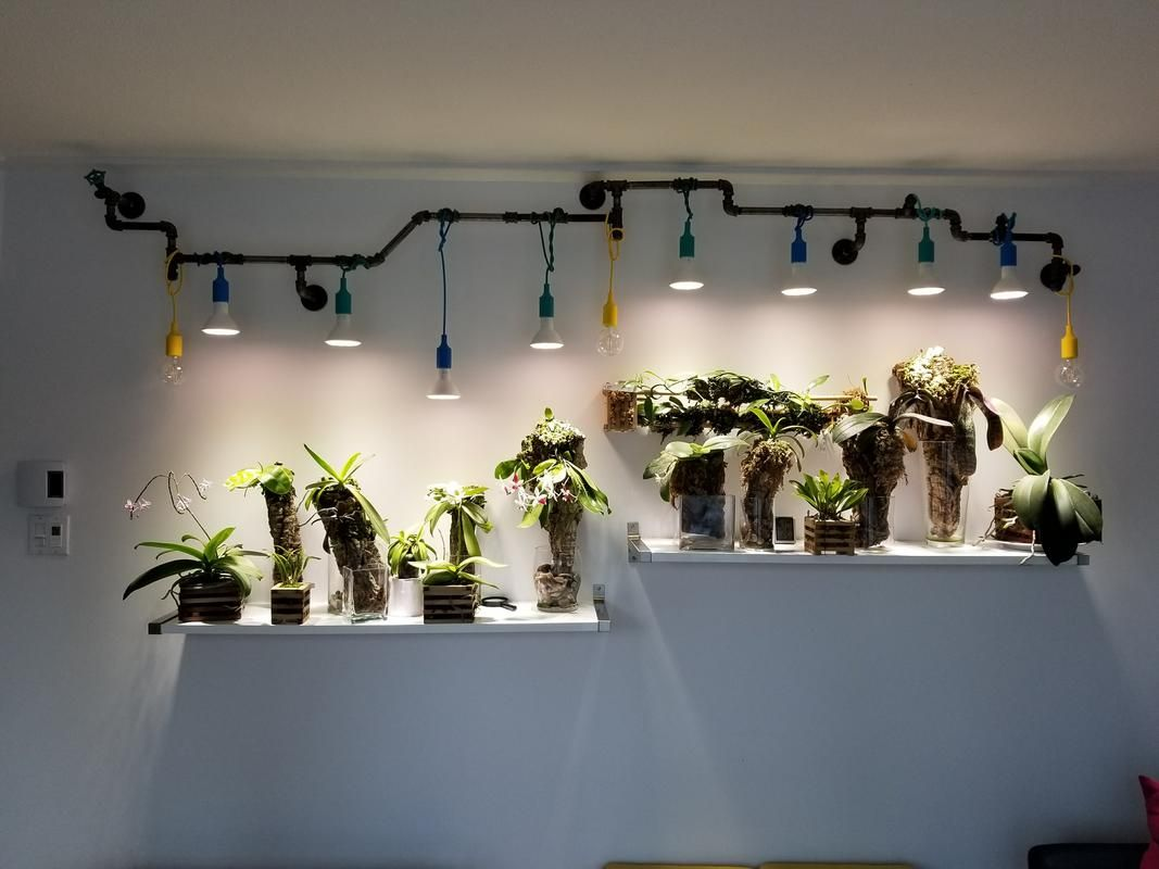 Grow-Light-Bulbs-For-Indoor-Plants
