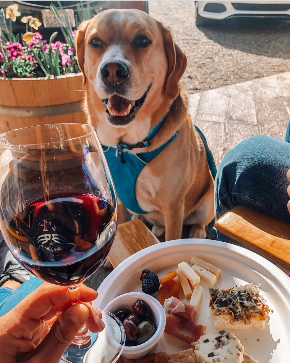 wags and wine