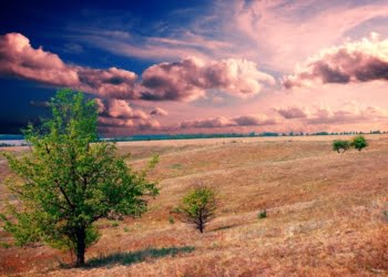 How You Can Make Money on Raw Land?