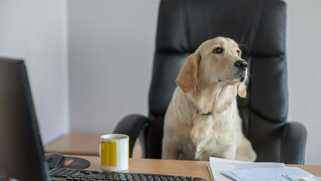 The Business Benefits of Becoming a Dog-Friendly Office