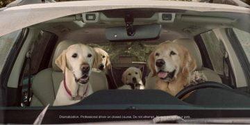 Dogs in Subaru ads